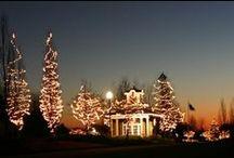 Harborside Lights / by Lake Carolina