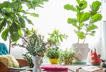 specifically: indoor garden / by Ashley Monroe