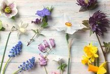 Botanicals / Sharing our love for precious botanicals  / by Liz Earle