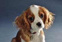 Favorite dog breeds / by Laurie