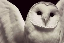 Owls <3 / Owl pictures, owl crafts and more owls!