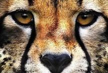 Animalia / The real kingdom.