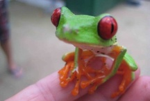 Frogs for Mandy / by Laura Aiken