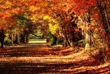 Autumn Splendor / by Ann Doheny Pastorella