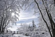 Winter Wonderland / by Ann Doheny Pastorella