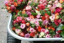 floral. / by Zeeba Anvary