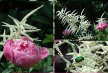 Fauna a flóra / zahrada a psi