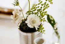 Plant / by Marangelie Caballero