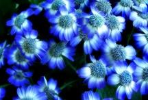 True Blue / by Tammy Ellis