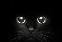 Black as the Night / by Tammy Ellis