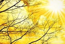 Sunny Yellow / by Tammy Ellis