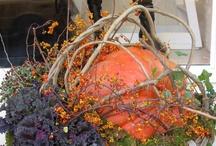 Fall ~ Halloween Ideas / by Teresa Nix