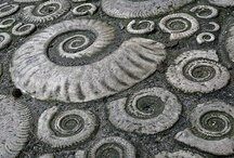 Minéraux & Fossiles / by Léa