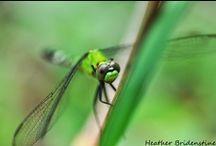 Heather Bridenstine's Nature Macro Shots / by Heather Jolley Bridenstine