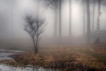 Among the trees / by Heather Jolley Bridenstine