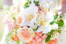 Weddings - Peach/Orange