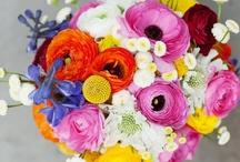 Weddings - Brights