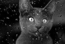 Animals / #cats #dogs #puppies #wild animals