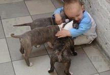 babies & pets / by Lynne Scott
