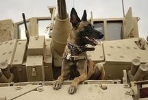 Pups In Service / by Lynne Scott