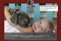 Purebred Breeders customers - Dog and Puppy Photos / On this board, Purebred Breeders LLC shares testimonials/reviews along with updated pics of our customers' puppies, dogs, and their families after their placement into their new homes.  These are comments and pictures from customers that have shared their experience on our Facebook page: https://www.facebook.com/purebredbreedersllc