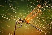 Fauna-Insects / Insects and amphibians, cool creatures and cool photography. / by Sher Eide