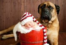 Pawlidays! / by Animal Chit-Chat Animal Communicator