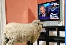 """Fox """"News"""" / by Brenda A"""