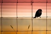 Oiseaux / by Lyne Bourgon