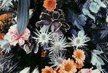 F L O R A / Flowers