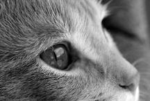 Animal Loves / by Lorinda Hays