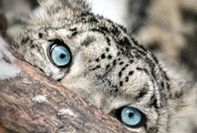 animal totems / {nature's life messengers}