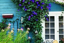 garden / I am enamored by the quintessential English Cottage style of gardening: wild untamed garden beds filled with layers of rich color and texture.