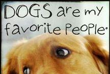 Dogs Are My Favorite People / by Lorinda Hays