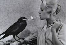 Crows / Put a Bird on it!
