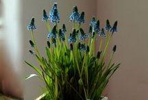 flower_power (kwiaty / rośliny)