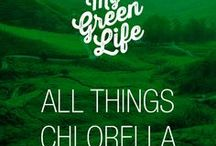 All things Chlorella / Chlorella and everything about the nutrient-dense superfood