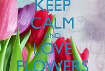 Inspirations... Flower Cart / by Jooli Khoo