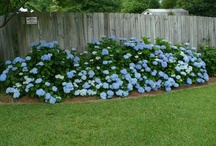 Flowers  - Hydrangeas  and Hostas   / love these / by suza wag