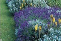 Gardening tips / Gardening, flowers, composting, garden layouts, dividing plants, killing weeds, green,