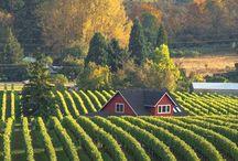 Oregon - Willamette valley / Eugene, Springfield,  Willamette River, McKenzie River, Oregon wine country,  Corvalis, Albany, Coburg, Cottage Grove, Salem