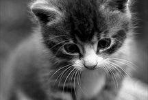 So Cute / by Maria Hudson