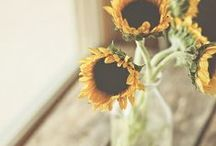 Brighten the Day / by Lindsey Dulla