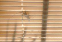 Curious Lizard / Lizards collection