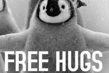 Penquins / penguins play jump swim, penguin baby family