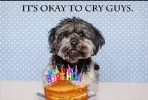 bday. / go shawty, it's ya birthday.