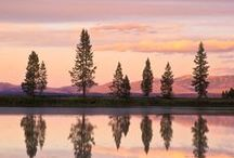 Reflection / by Rene M.