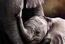 Elephant Whispering