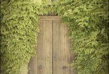 Doors / by Molly Wills