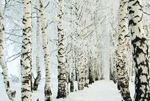 Seasons / by Serendipity Traveler